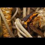 Slangebid