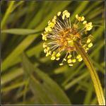 Bagsiden af en blomst - noget ugræs på grunden.