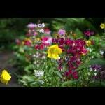 Blomsterflor