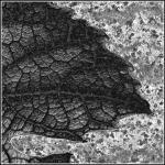 Efeu på rust - sammensat af 2 billeder