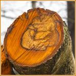 Råd i træstamme