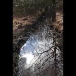 2010.04.17 - Spejllbillede